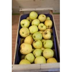 "Pommes ""Chanteclerc"" (500g)"