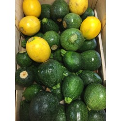 Courgettes rondes (500g)
