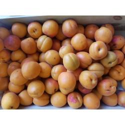 Abricots (500g)