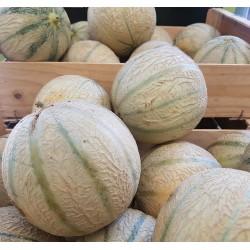 Melon (1 pièce)