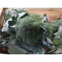 Brocoli (environ 1kg)