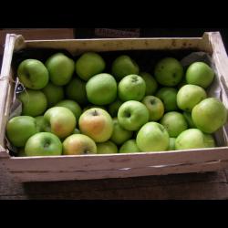 Pommes OPAL BIO (1KG)