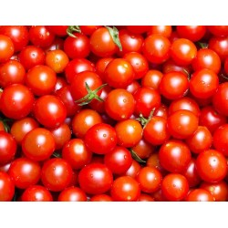 Tomates cerises 250g